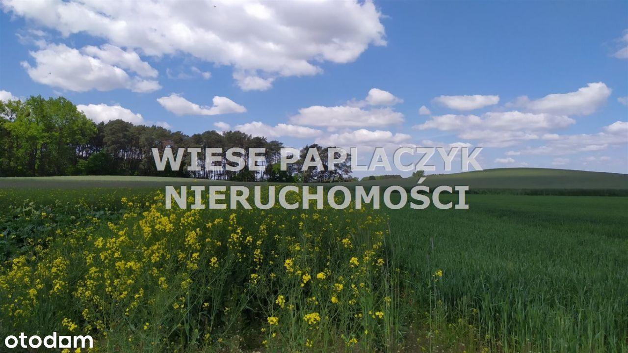 Grzebienisko,duża działka 3178m2 ul.Polna