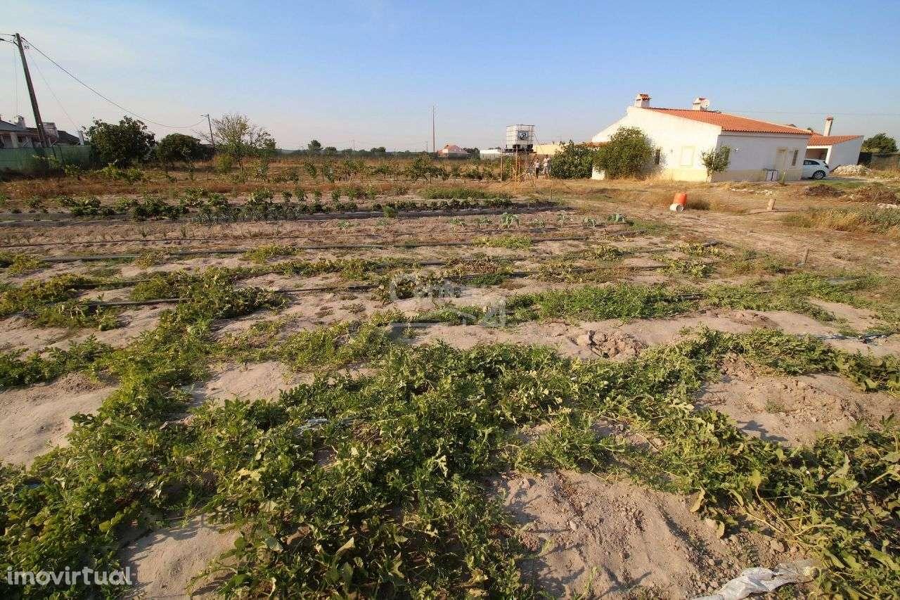 Quintas e herdades para comprar, Poceirão e Marateca, Palmela, Setúbal - Foto 27