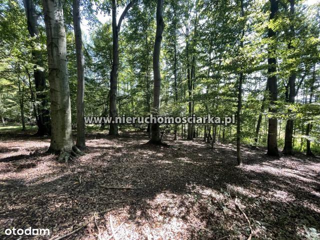 Działka leśna 5,5 ha Bełsznica