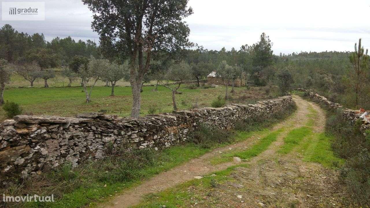 Quintas e herdades para comprar, Benquerenças, Castelo Branco - Foto 5