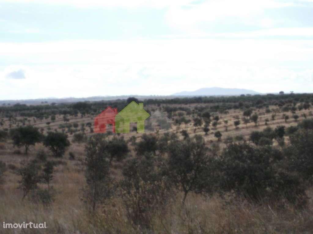 Quintas e herdades para comprar, Albernoa e Trindade, Beja - Foto 8