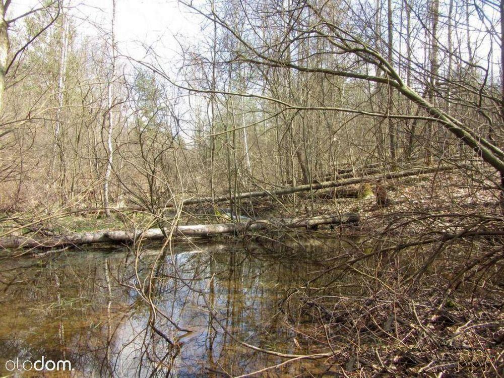 Działki ok 1,5 ha z drewnianym domem gm. Stąporków