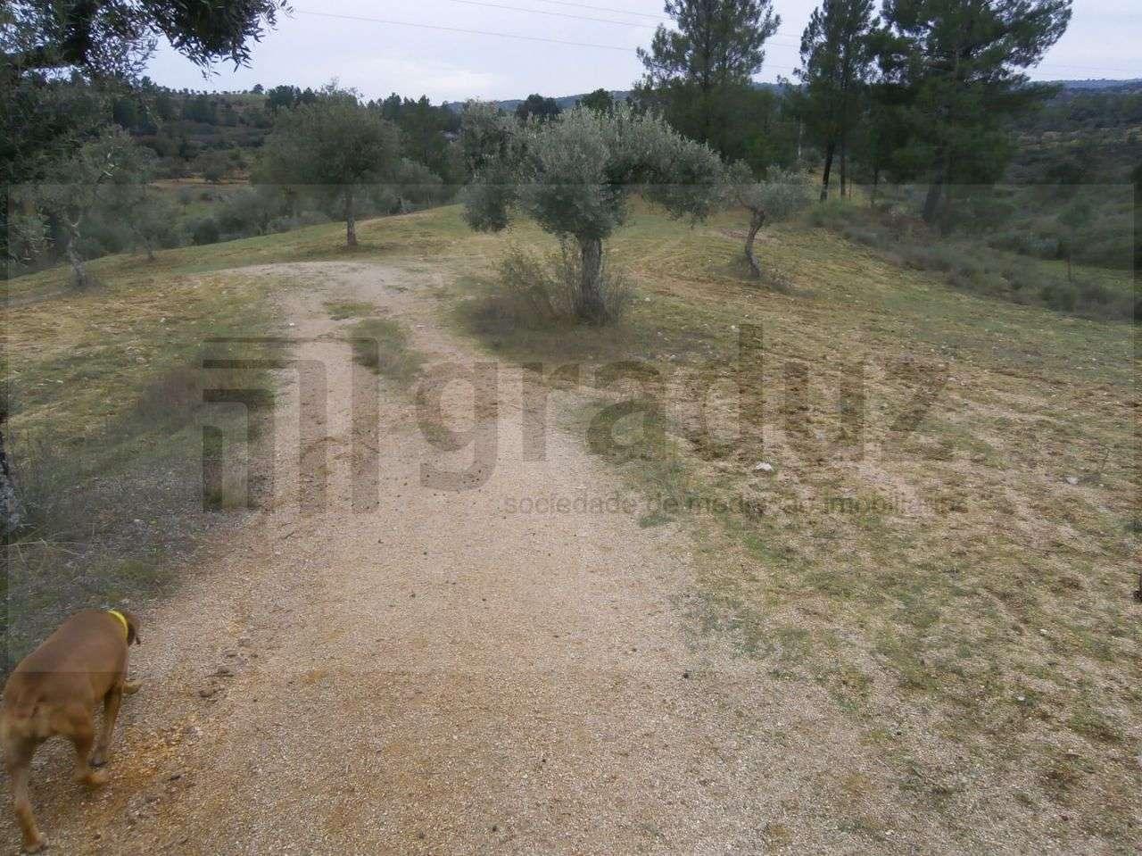 Quintas e herdades para comprar, Alcains, Castelo Branco - Foto 3