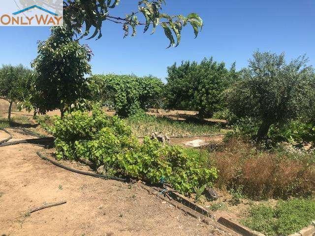 Quintas e herdades para comprar, Malagueira e Horta das Figueiras, Évora - Foto 20