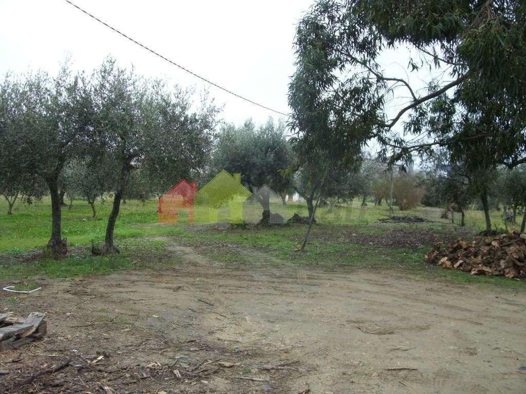 Terreno para comprar, Serpa (Salvador e Santa Maria), Beja - Foto 4