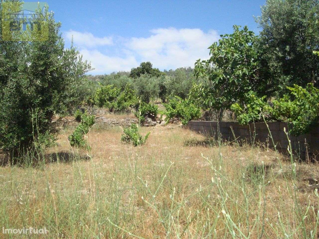 Quintas e herdades para comprar, Almaceda, Castelo Branco - Foto 33