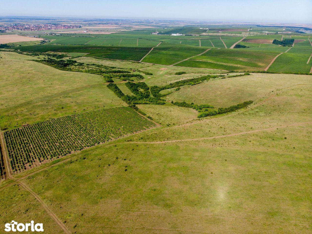 Teren 230 hectare Recaș