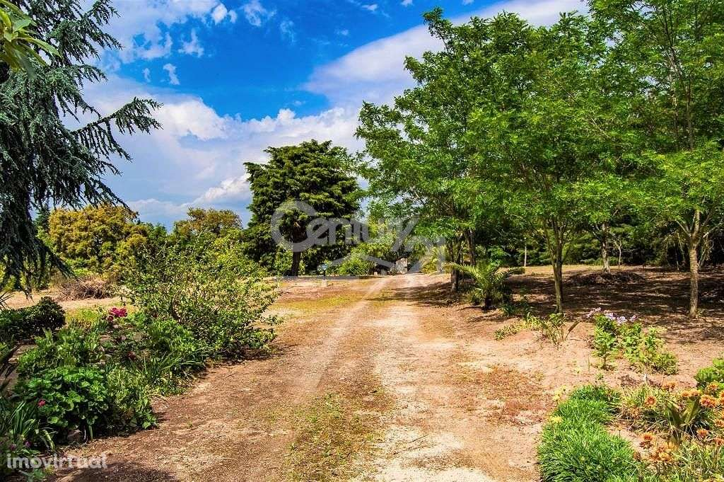 Quintas e herdades para comprar, Santiago do Cacém, Santa Cruz e São Bartolomeu da Serra, Setúbal - Foto 36