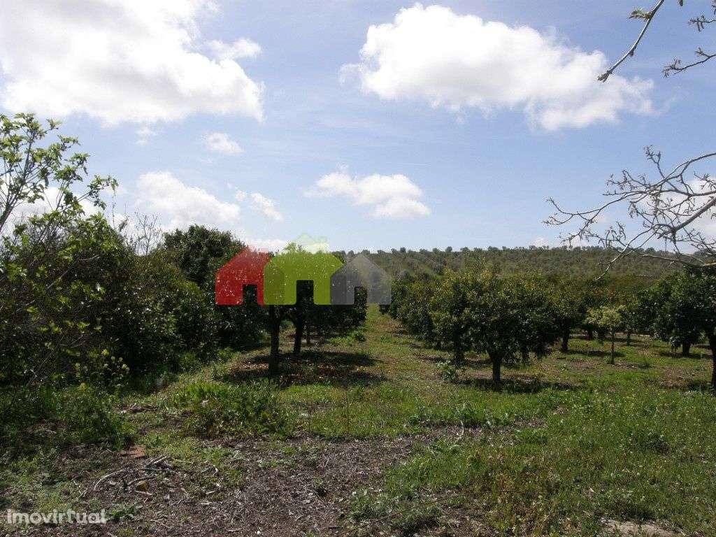 Terreno para comprar, Santa Vitória e Mombeja, Beja - Foto 10