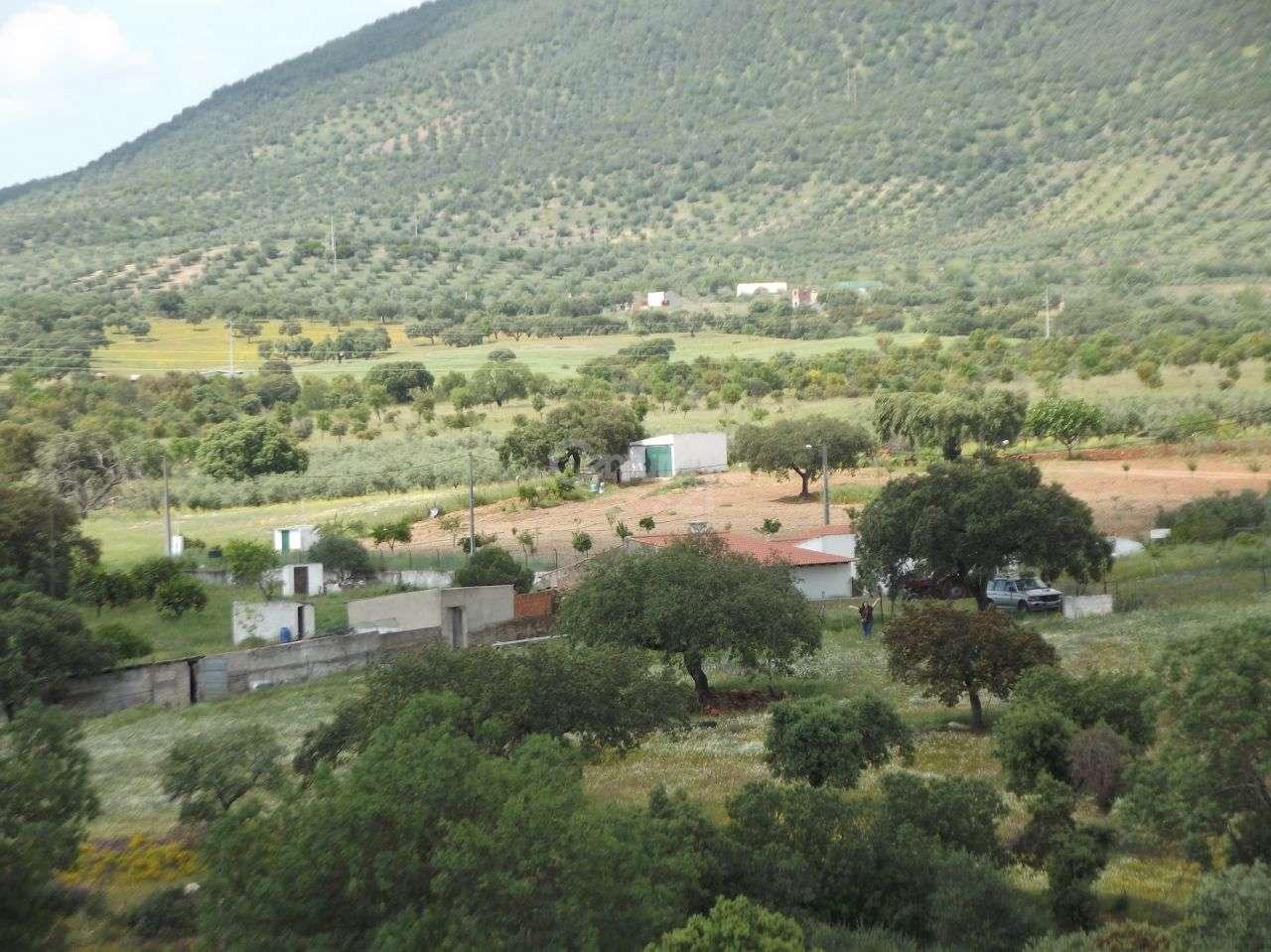 Quintas e herdades para comprar, Vila Nova de São Bento e Vale de Vargo, Serpa, Beja - Foto 5