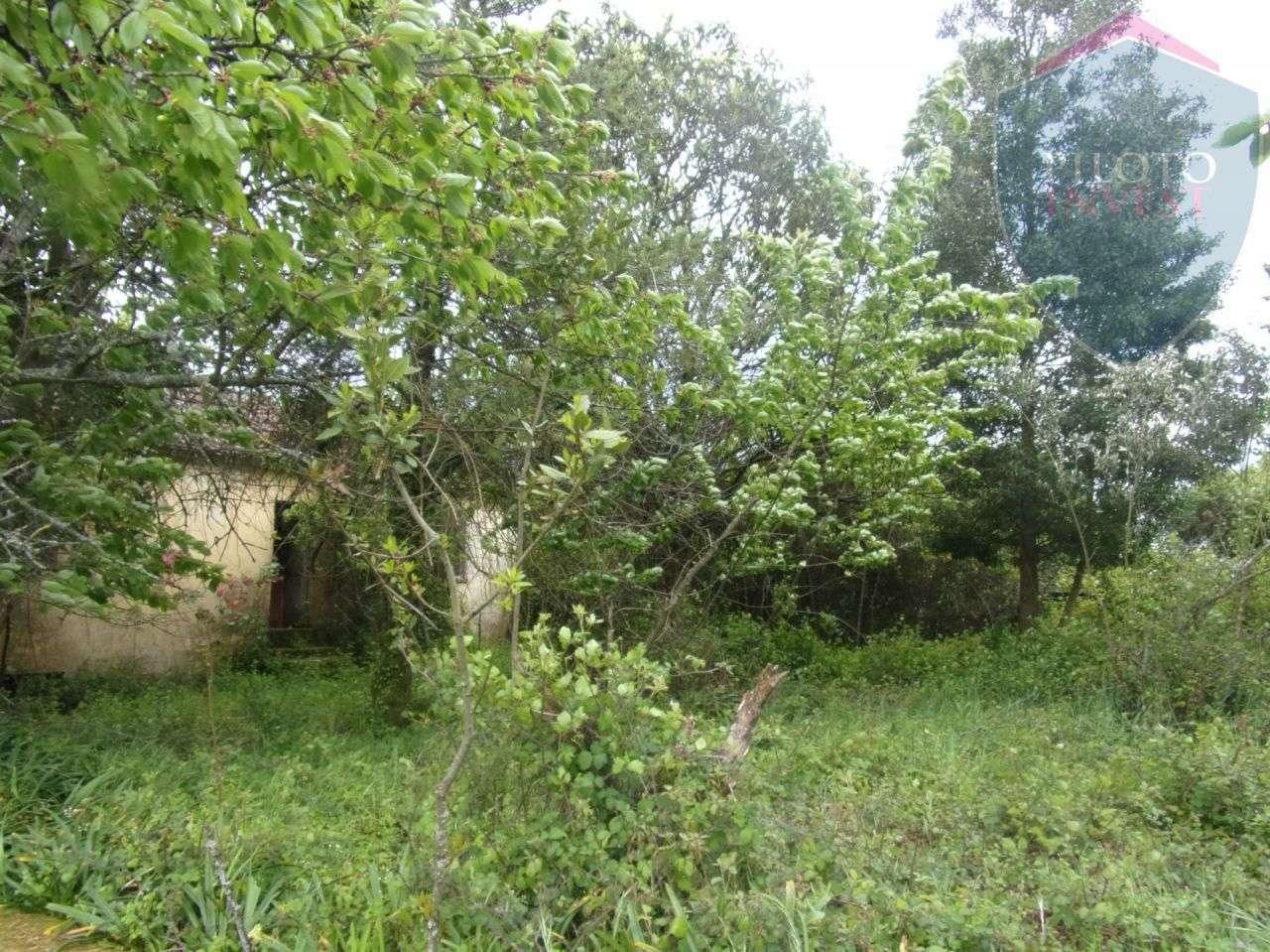 Quintas e herdades para comprar, São Miguel do Outeiro e Sabugosa, Viseu - Foto 10