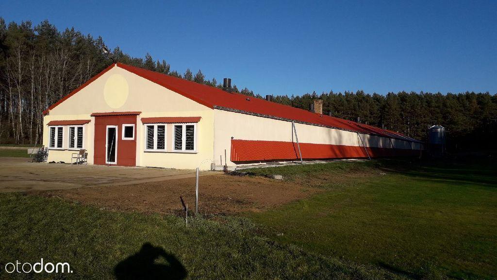 Hala/Magazyn, 14 600 m², Santoczno