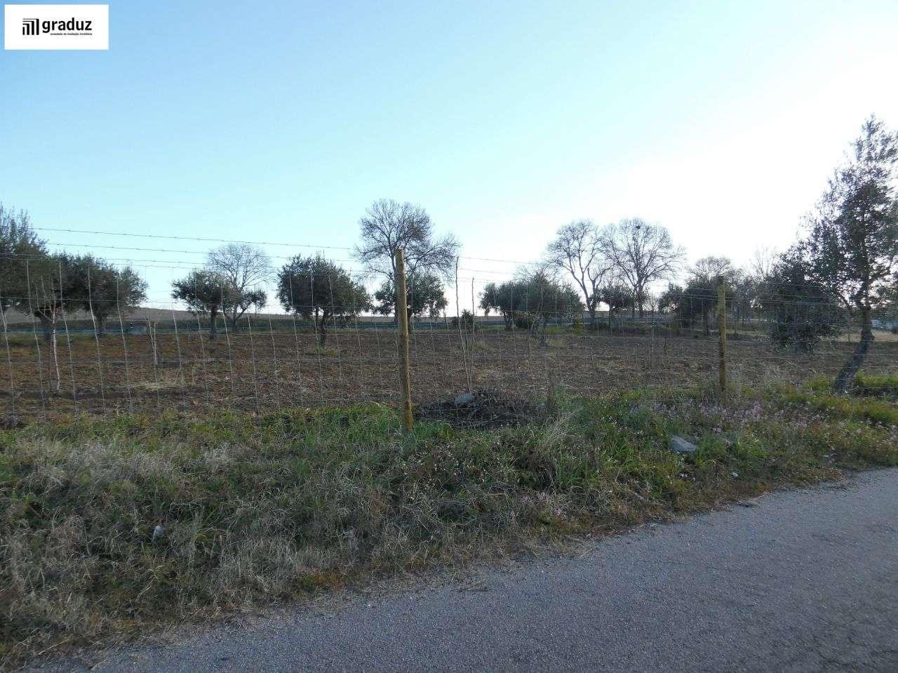 Terreno para comprar, Idanha-a-Nova e Alcafozes, Castelo Branco - Foto 8