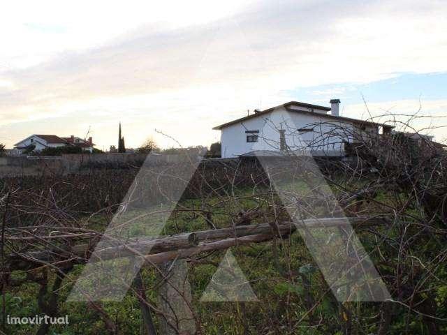 Terreno para comprar, Branca, Aveiro - Foto 1
