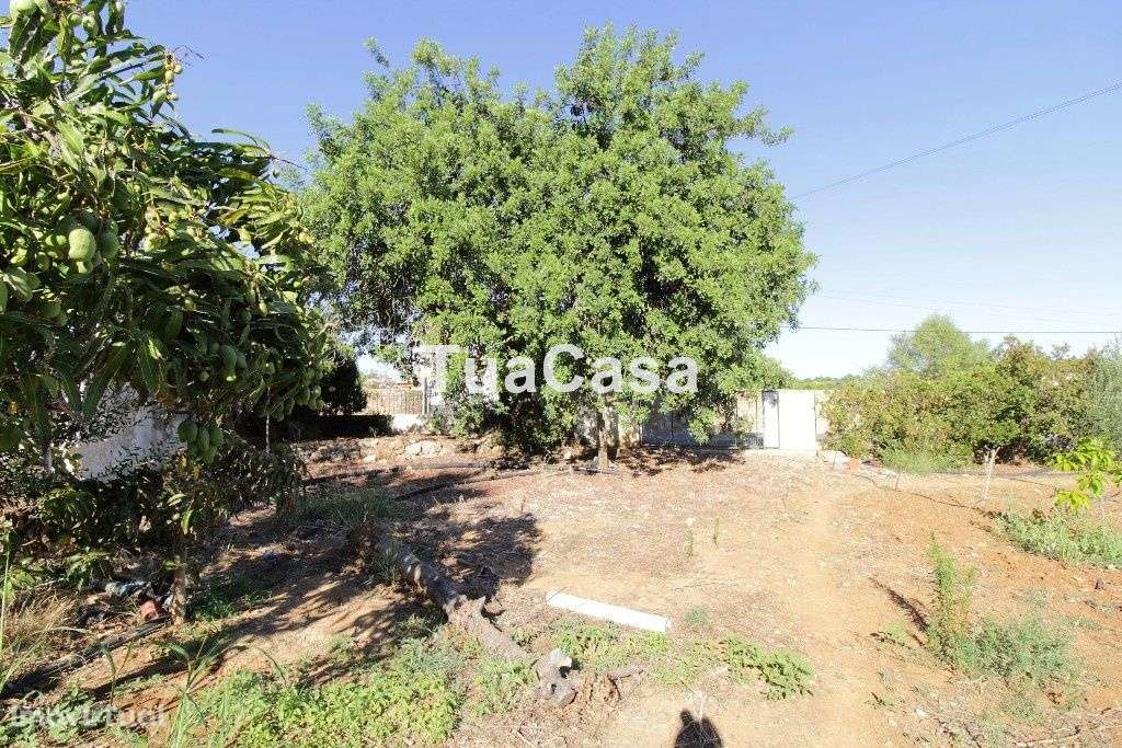 Quintas e herdades para comprar, Moncarapacho e Fuseta, Olhão, Faro - Foto 29