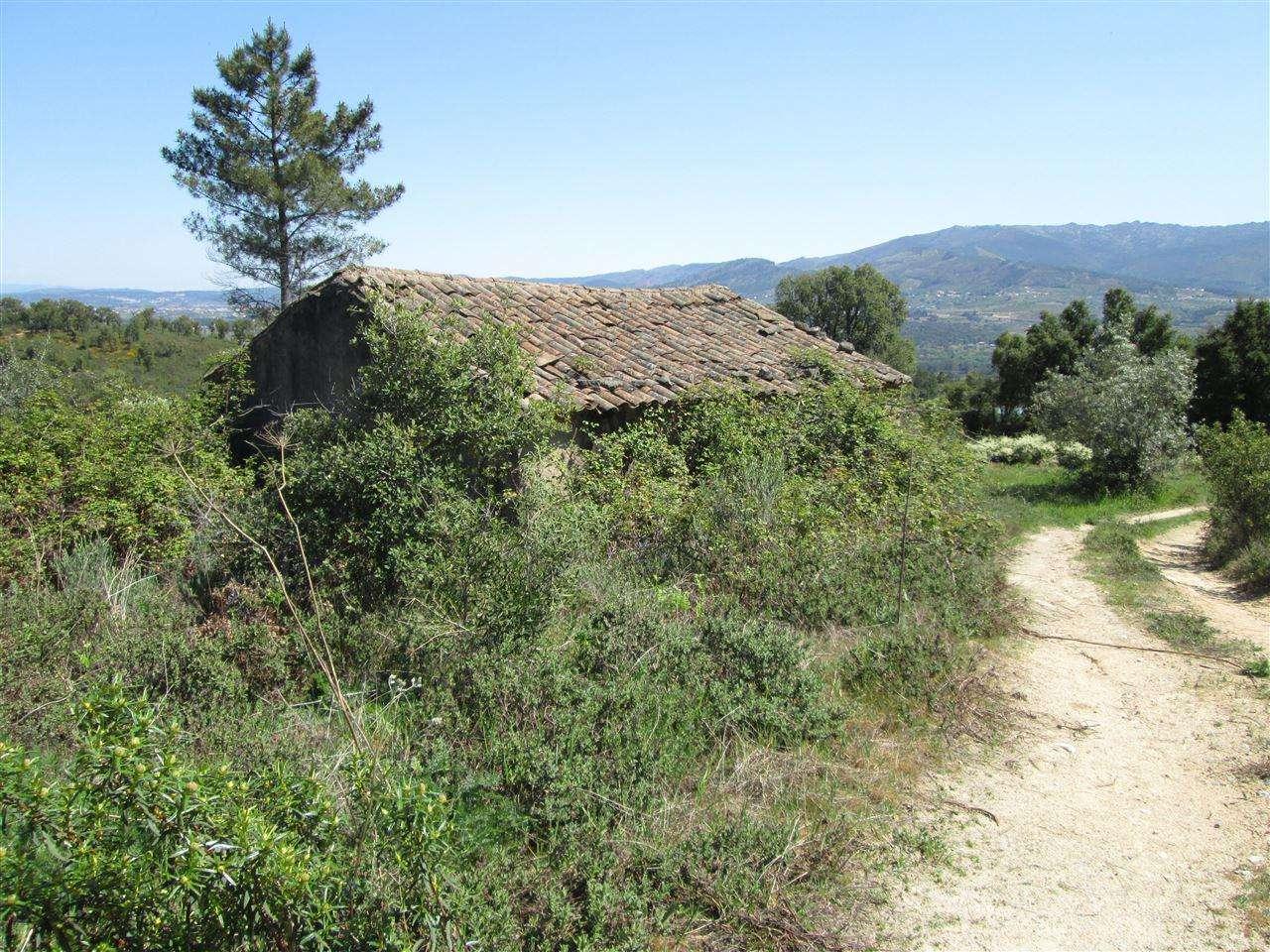 Quintas e herdades para comprar, Telhado, Castelo Branco - Foto 9