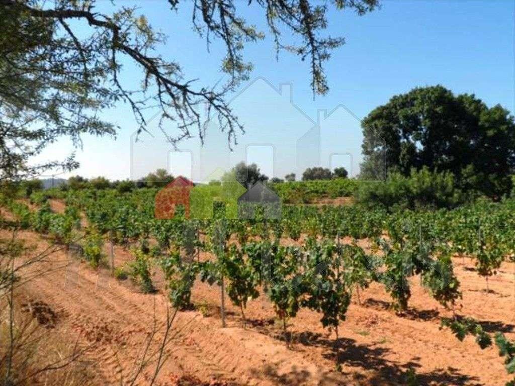 Terreno para comprar, Pedrógão, Vidigueira, Beja - Foto 5