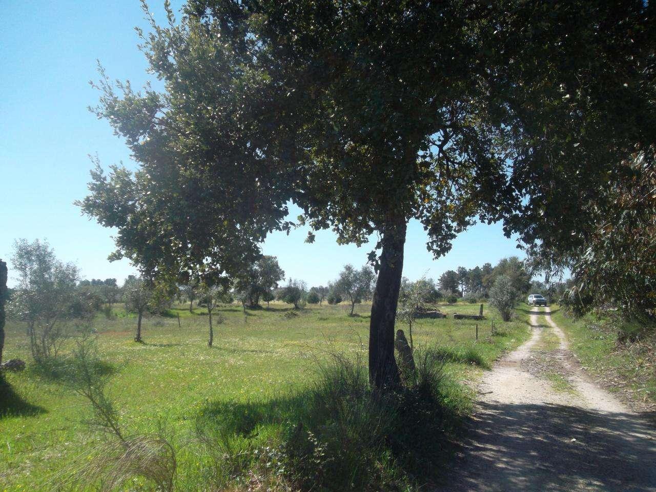 Quintas e herdades para comprar, Lardosa, Castelo Branco - Foto 9