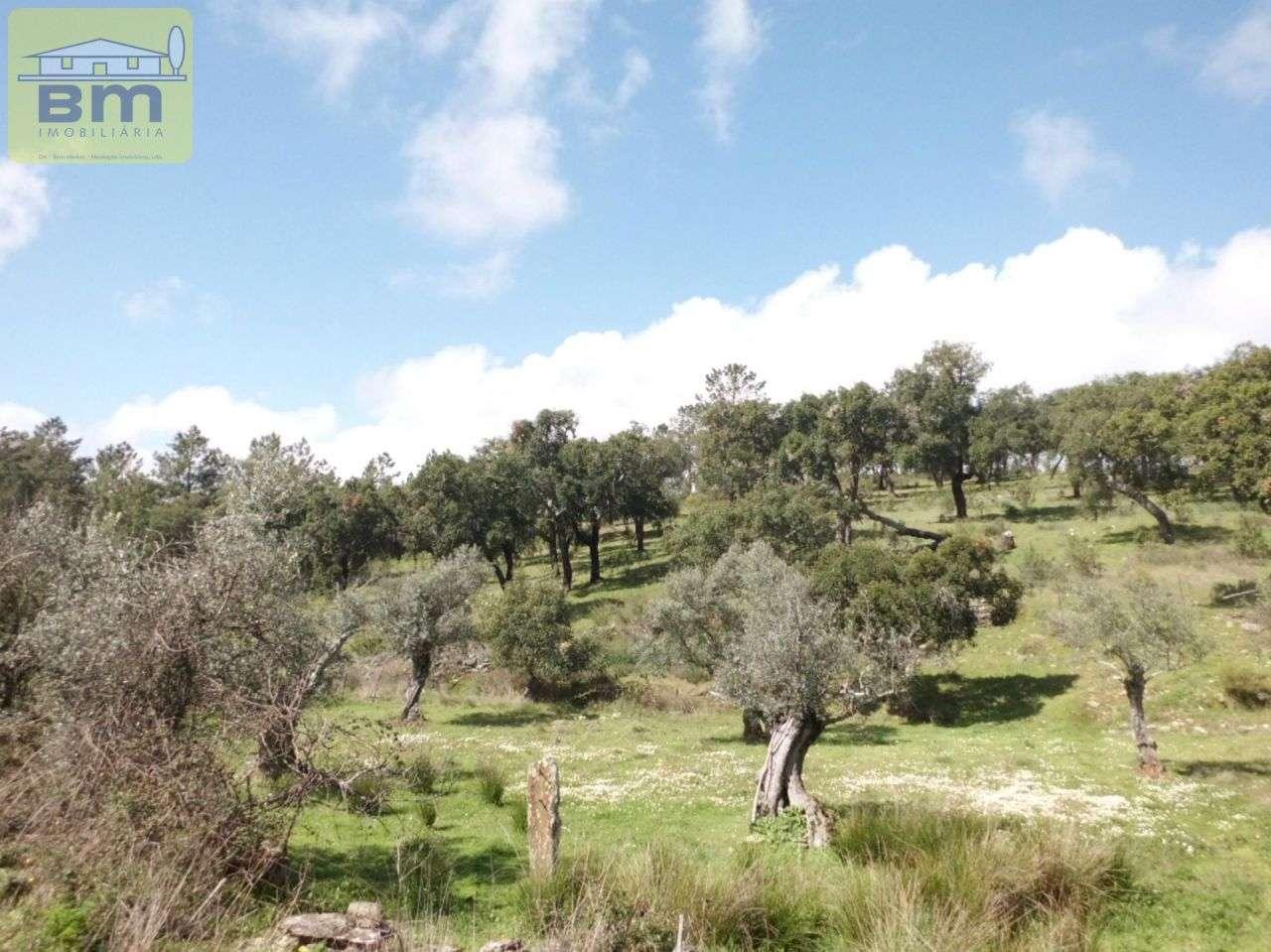 Quintas e herdades para comprar, Castelo Branco - Foto 6