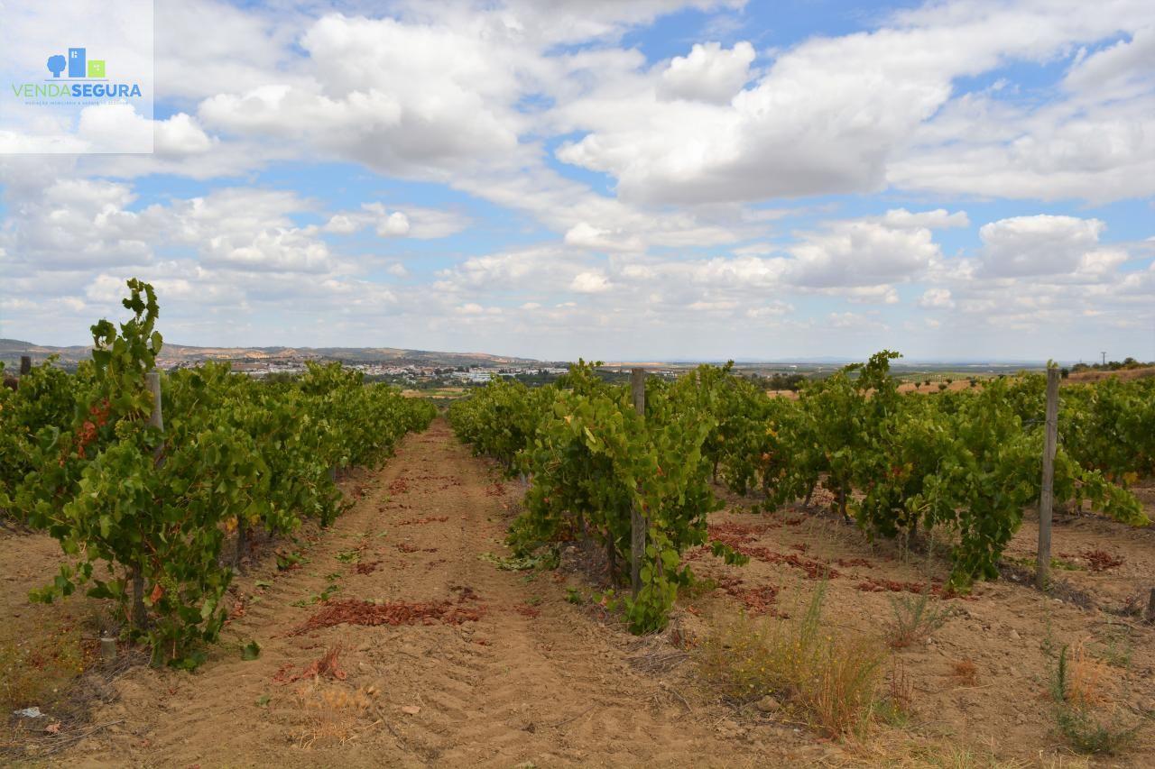 Vende-se terreno agrícola com vinha   Vila de Frades