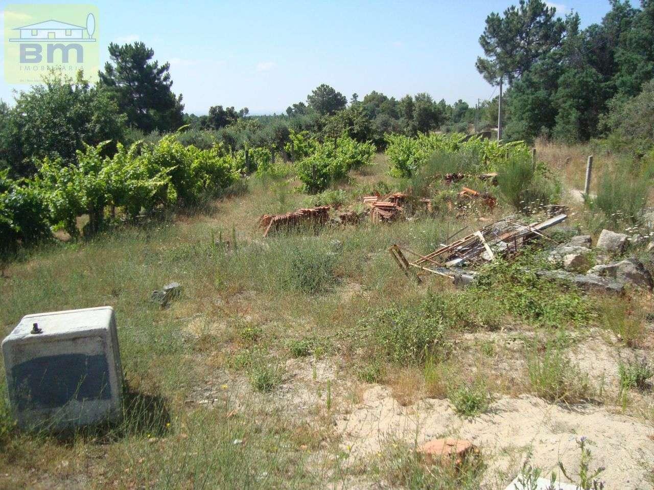 Quintas e herdades para comprar, Almaceda, Castelo Branco - Foto 5