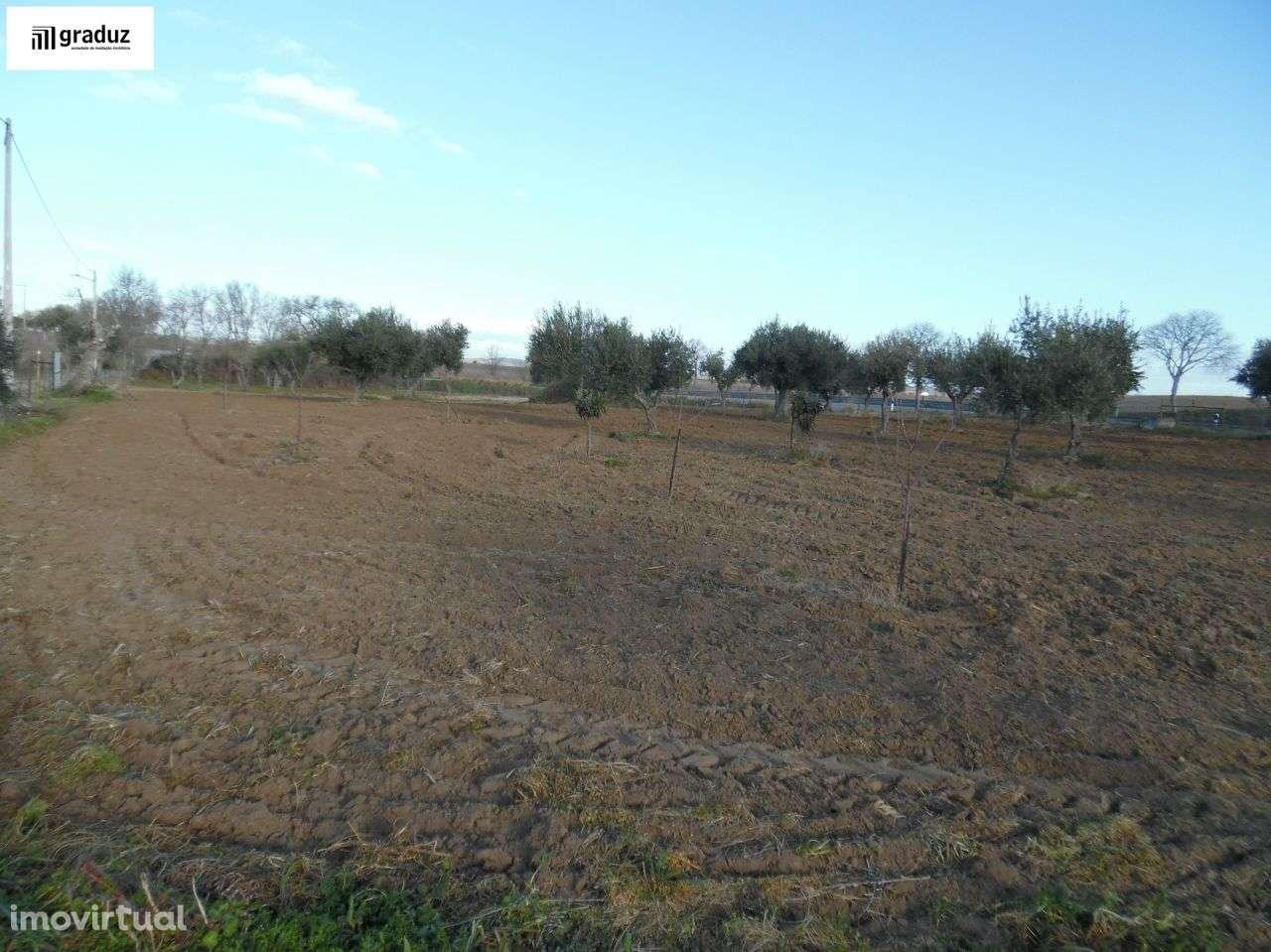 Terreno para comprar, Idanha-a-Nova e Alcafozes, Castelo Branco - Foto 5