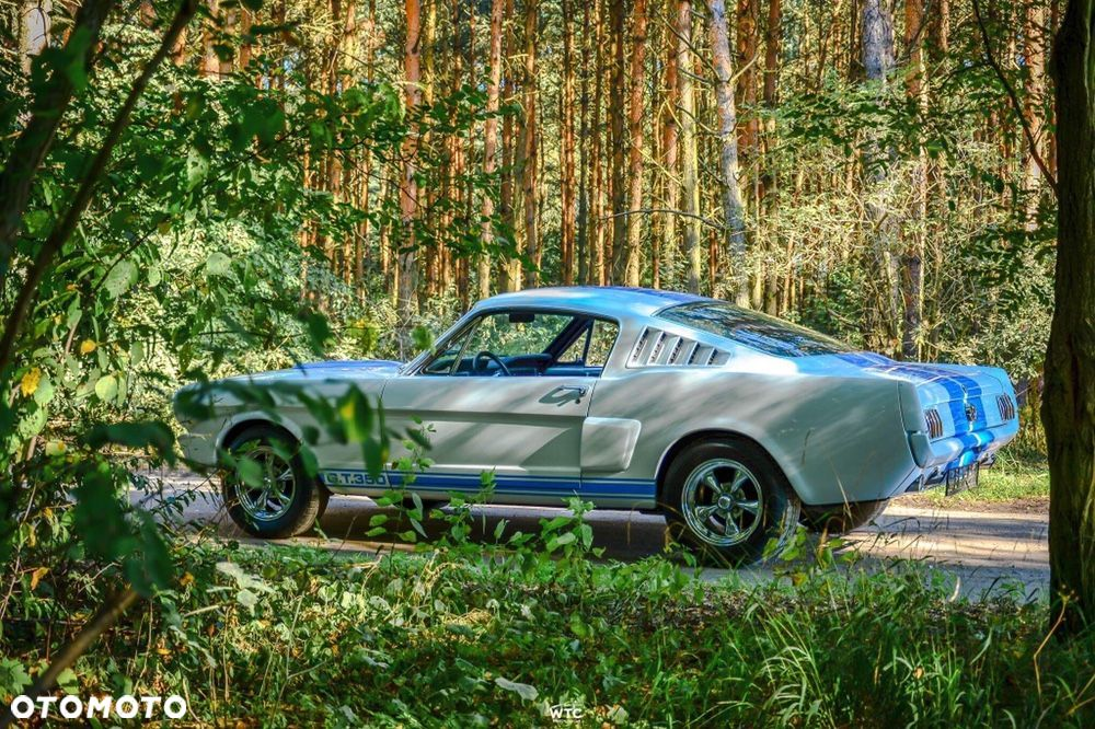 Ford Mustang Shelby Tribute - 1