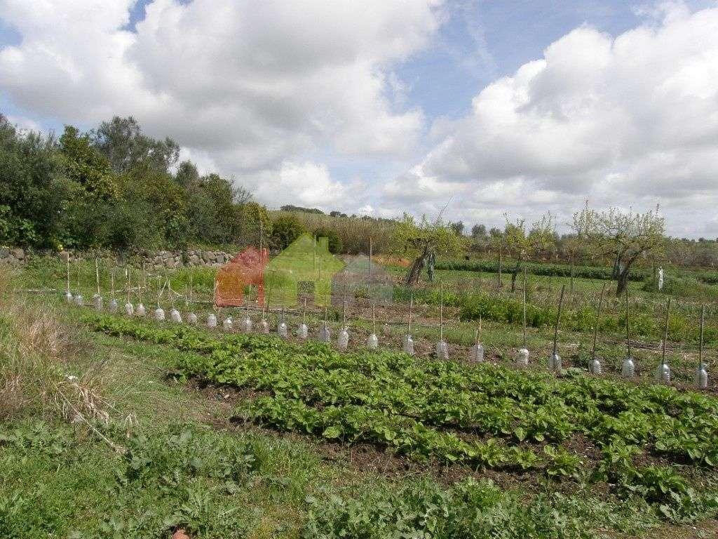 Terreno para comprar, Santa Vitória e Mombeja, Beja - Foto 9
