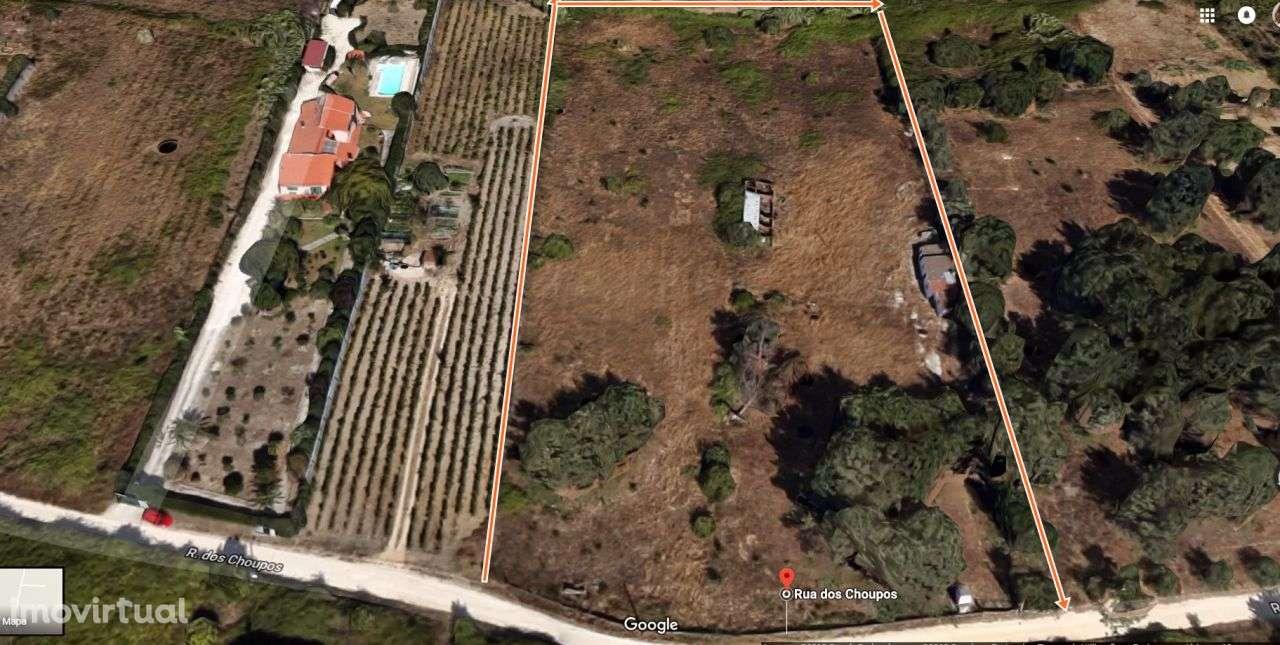 Terreno para comprar, Cartaxo e Vale da Pinta, Santarém - Foto 1