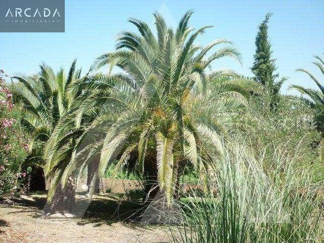 Quintas e herdades para comprar, Sangalhos, Anadia, Aveiro - Foto 14