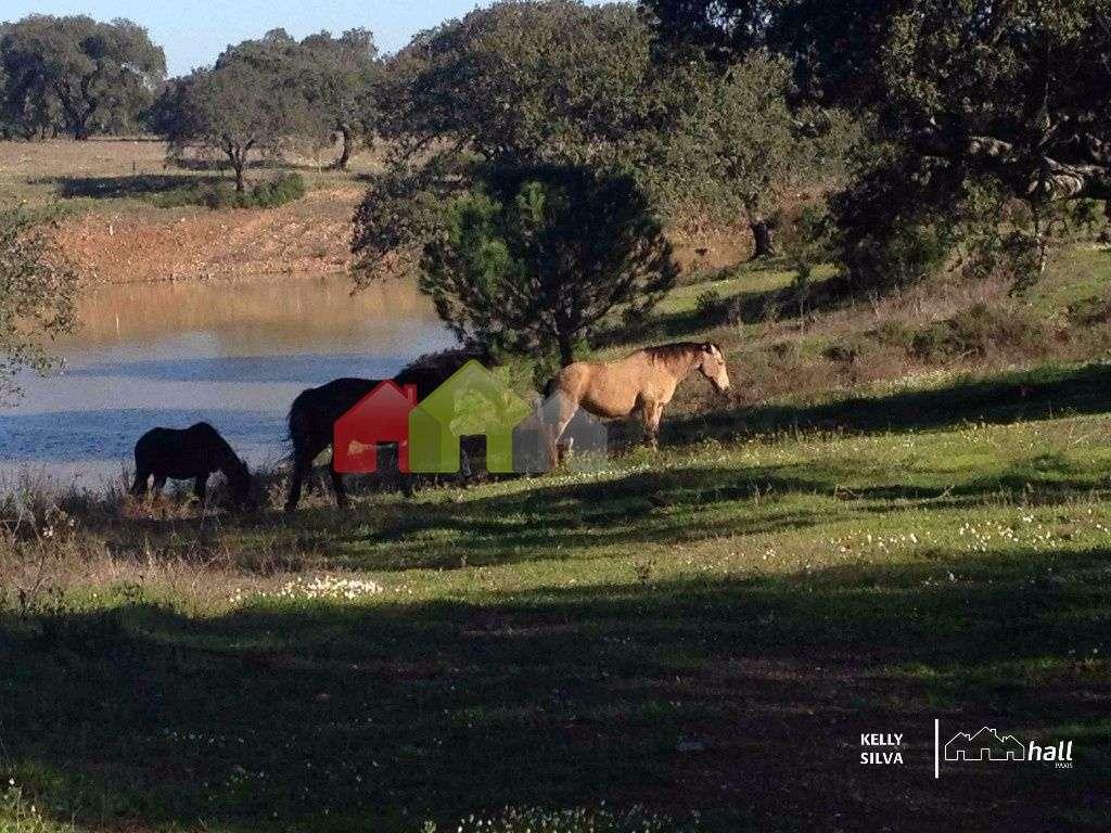 Quintas e herdades para comprar, Azinheira dos Barros, Setúbal - Foto 20