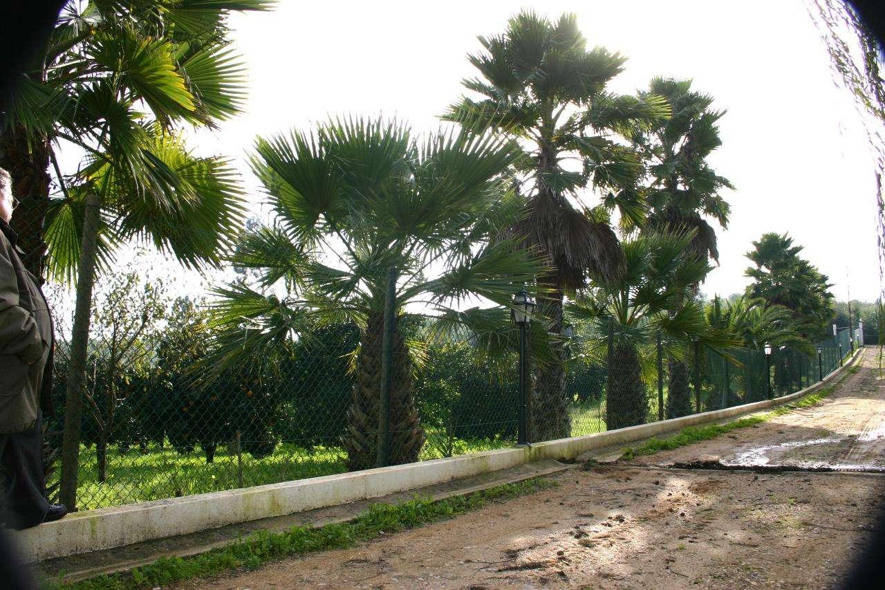 Quintas e herdades para comprar, Praia do Ribatejo, Santarém - Foto 28