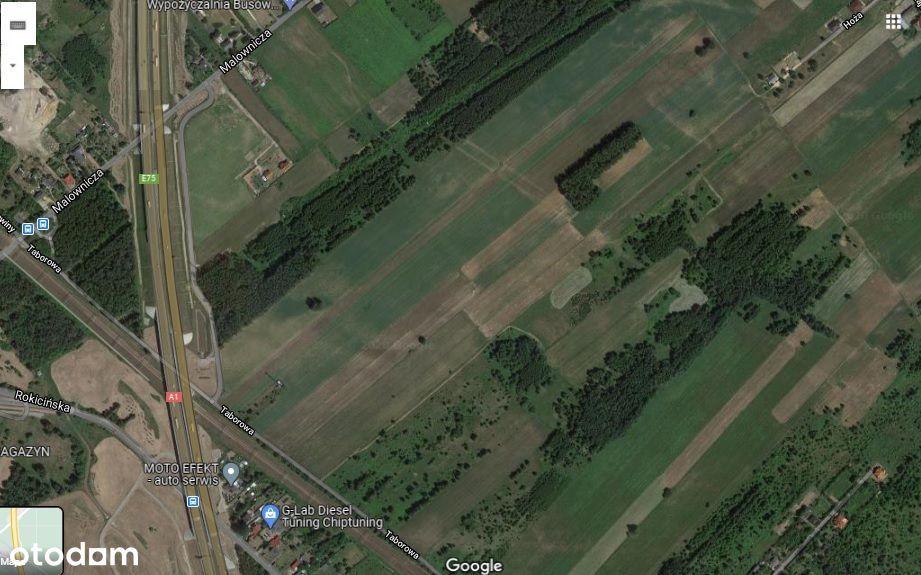 Działka przy Malowniczej na dzierżawę 1,5 ha, nawe
