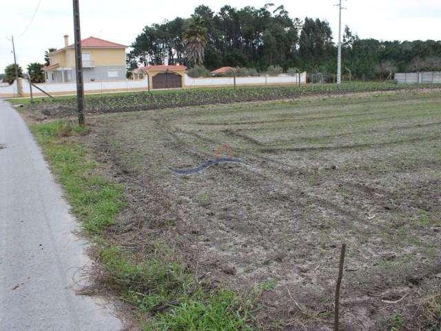 Terreno para comprar, Louriçal, Pombal, Leiria - Foto 4