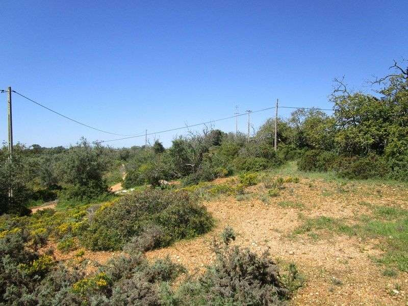 Quintas e herdades para comprar, Estômbar e Parchal, Faro - Foto 13