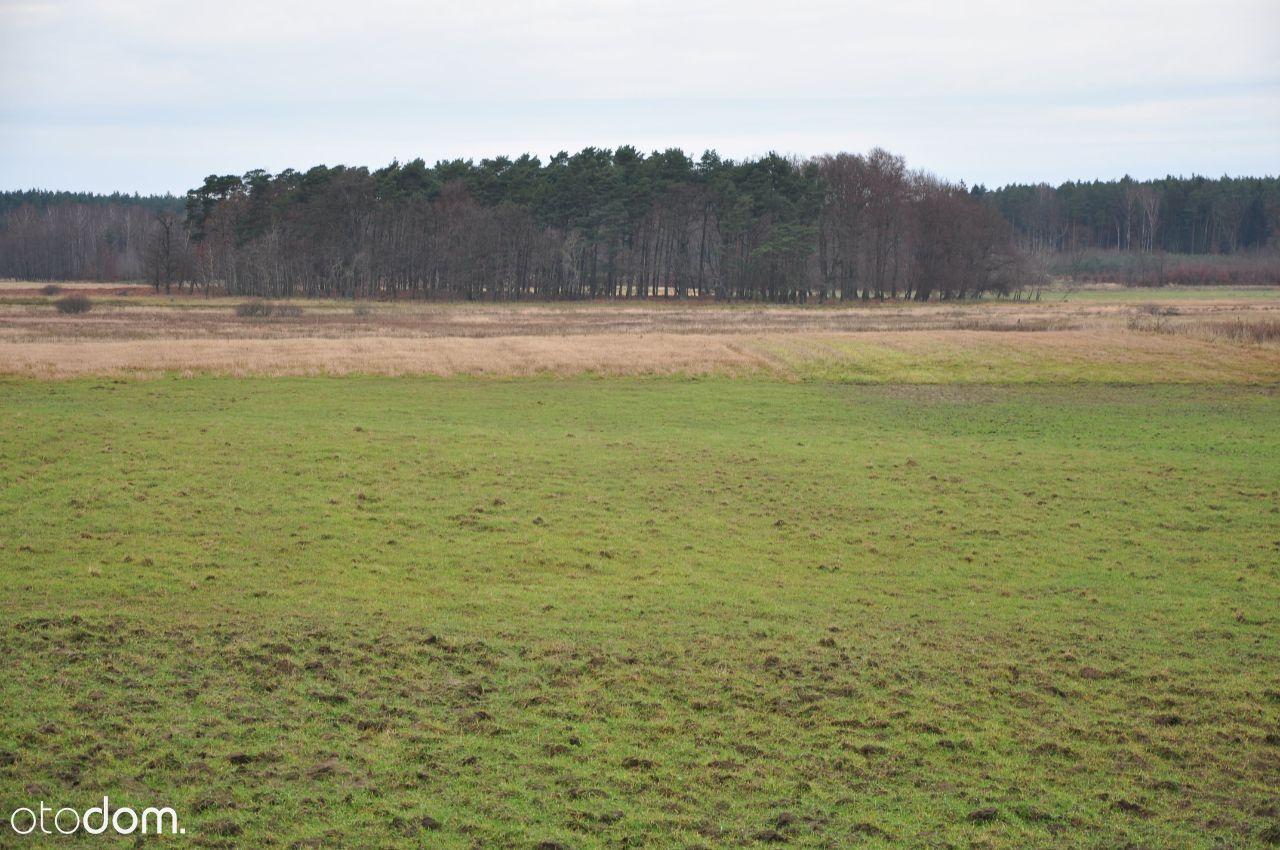Działka budowlana (warunki) k. Dziwnówka-las obok