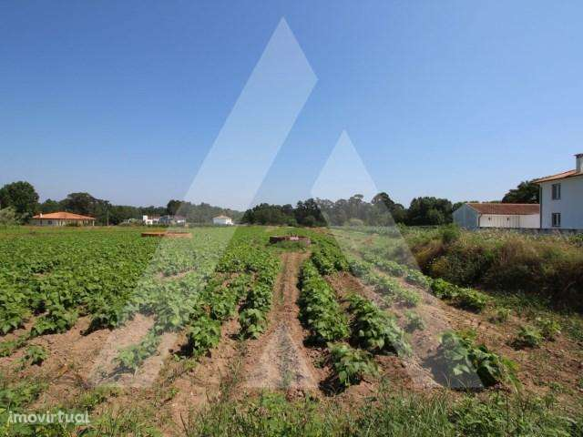 Terreno para comprar, Palhaça, Aveiro - Foto 1