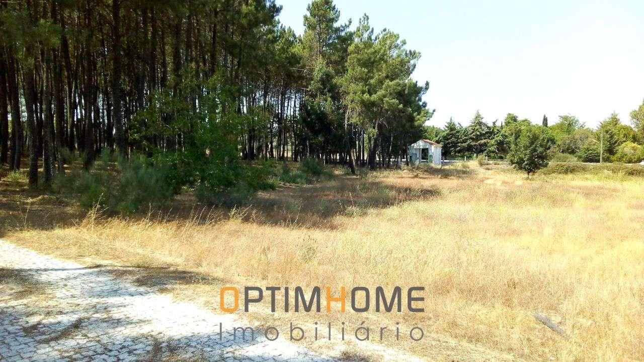 Quintas e herdades para comprar, Caria, Belmonte, Castelo Branco - Foto 18