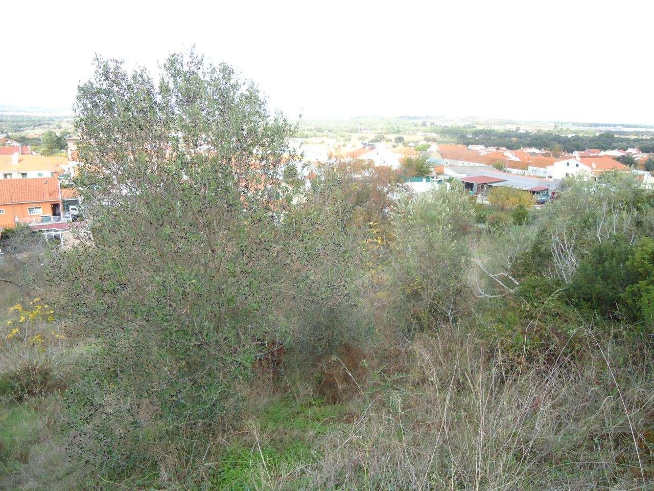 Terreno para comprar, Quinta do Anjo, Setúbal - Foto 10