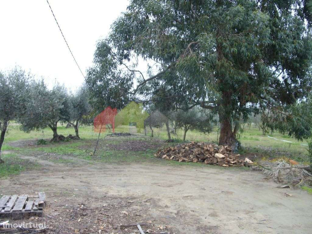 Terreno para comprar, Serpa (Salvador e Santa Maria), Beja - Foto 3