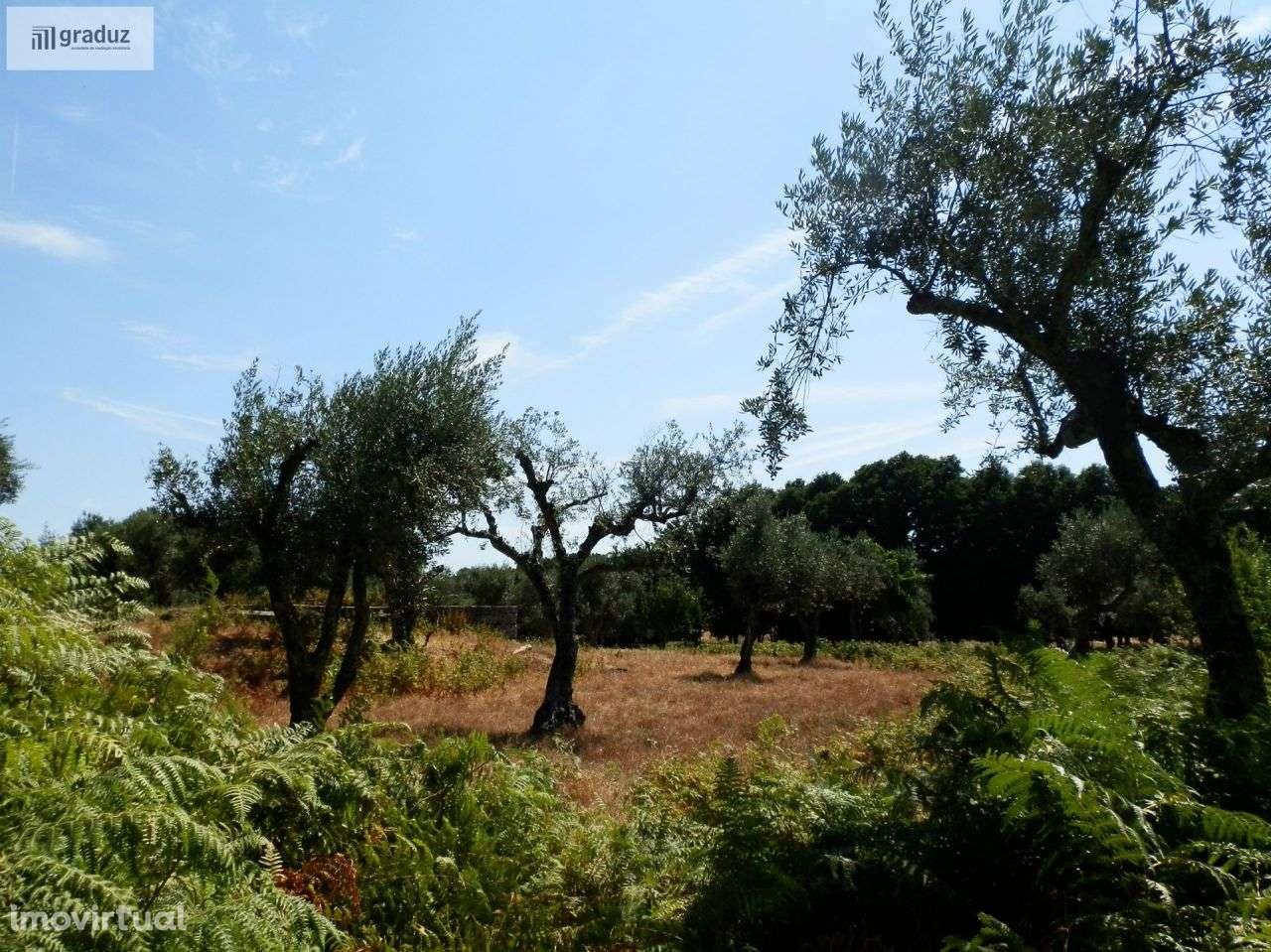 Quintas e herdades para comprar, Louriçal do Campo, Castelo Branco - Foto 7