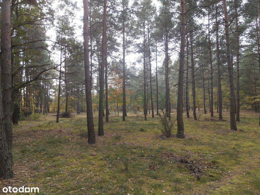 Piękna działka leśno - budowlana w józefowie