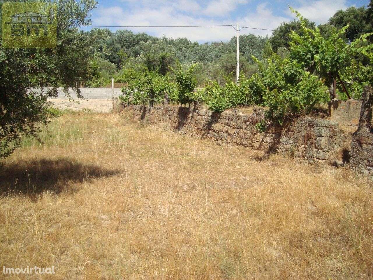 Quintas e herdades para comprar, Almaceda, Castelo Branco - Foto 26