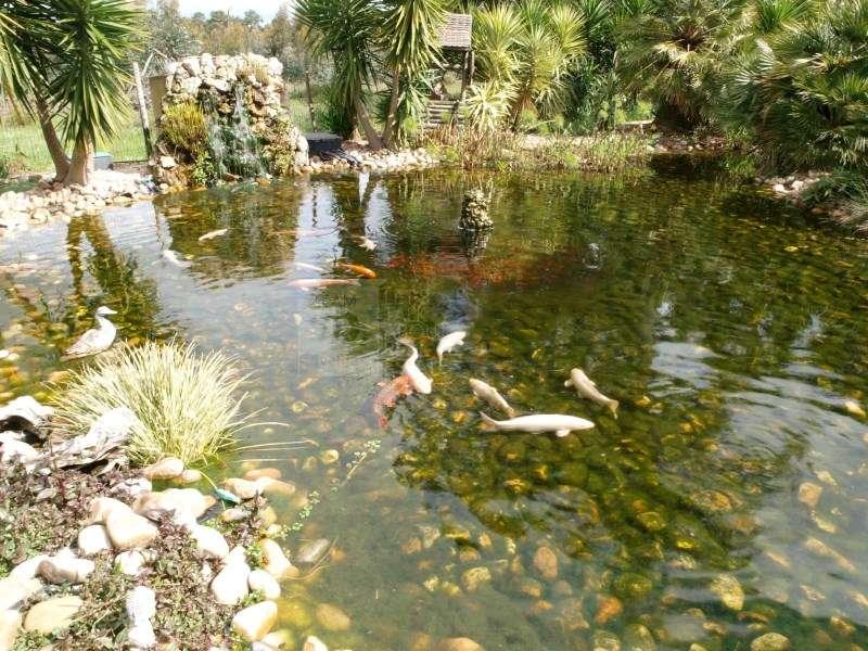 Quintas e herdades para comprar, Quinta do Anjo, Setúbal - Foto 2