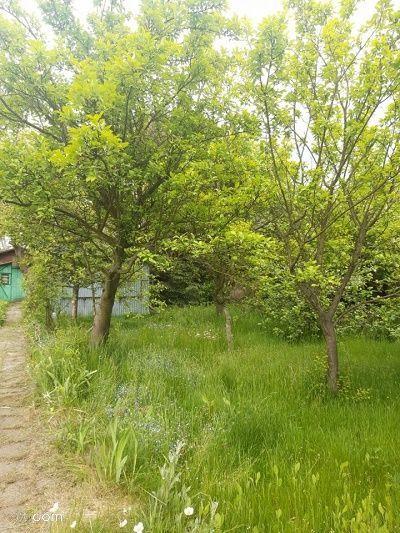 Działka rekreacyjna o pow. 491 m2, Kalisz