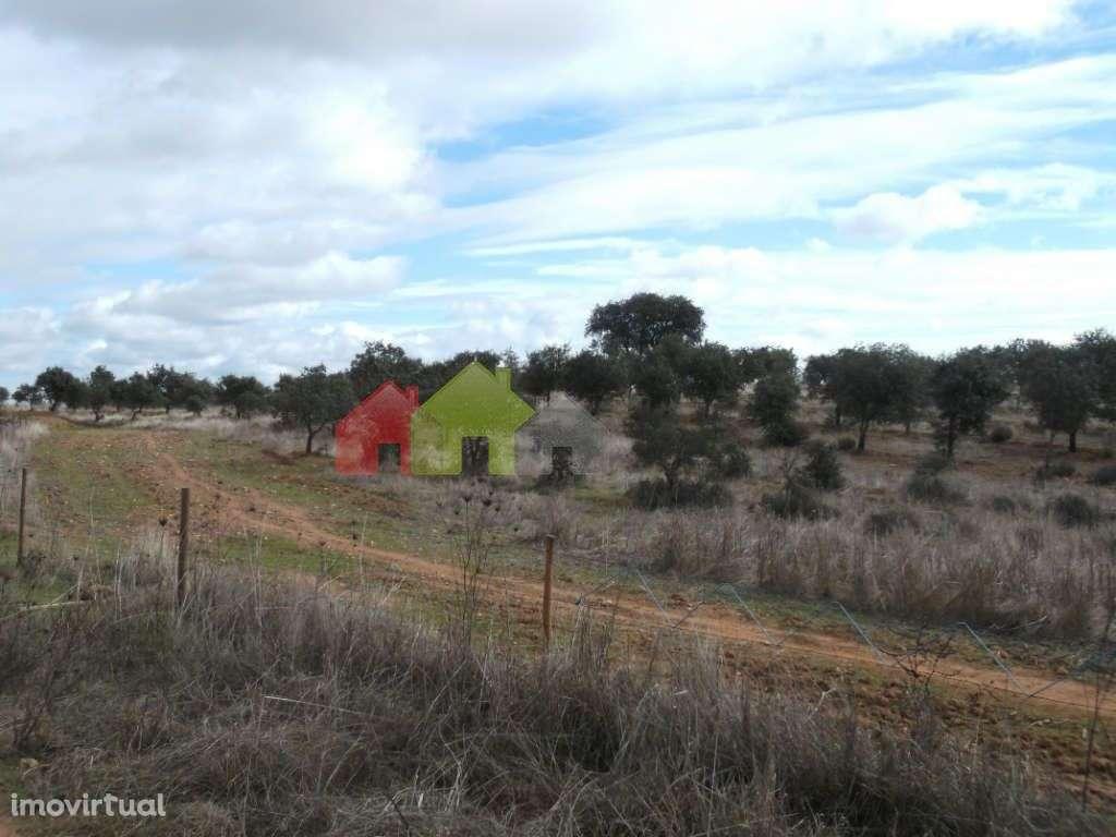 Quintas e herdades para comprar, Albernoa e Trindade, Beja - Foto 9