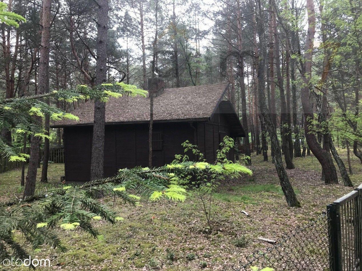 Działka budowlana z domkiem w lesie