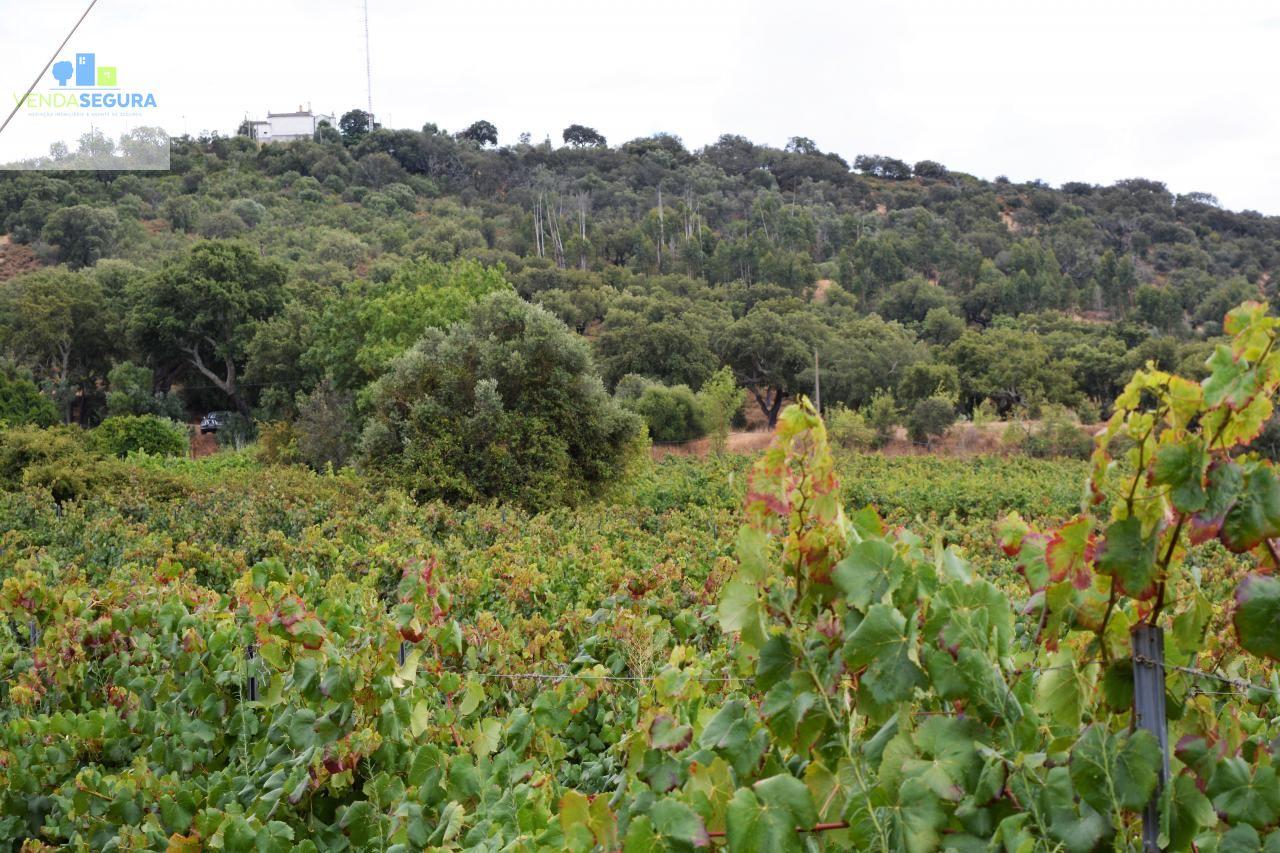 Terreno agrícola com vinha e olival | Vila de Frades