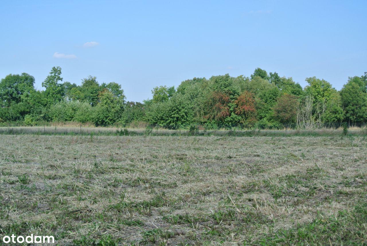 Działka rolna w Gorzewie