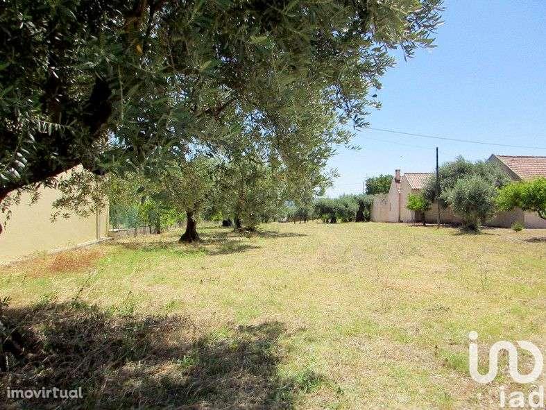 Terreno para comprar, Tomar (São João Baptista) e Santa Maria dos Olivais, Tomar, Santarém - Foto 3